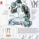 curl de biceps alterno en supinación