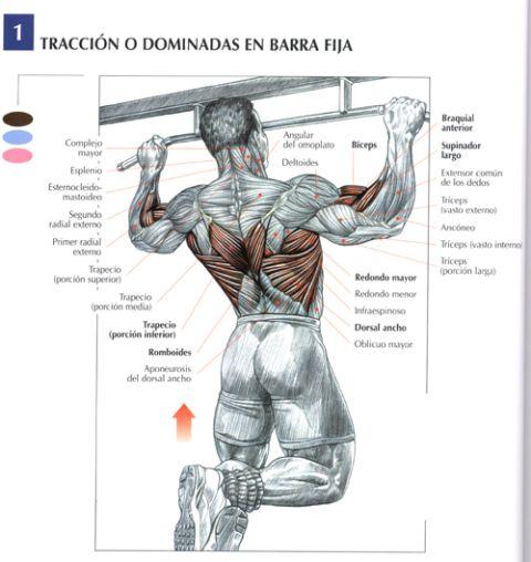 Vypyachivanie del departamento de pecho de la columna vertebral