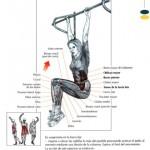 elevacion de piernas en barra fija