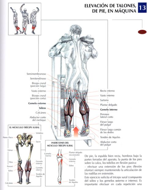 Construye una base sólida, ejercicios para piernas