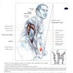 extensiones de triceps en polea ata