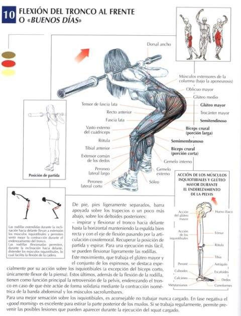 flexion de tronco al frente