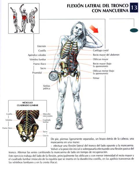 flexion lateral del tronco con mancuerna