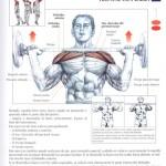Construye brazos de acero, ejercicios para hombros