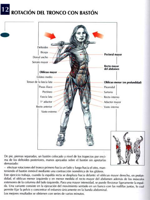Ejercicios para el abdomen, con imagenes.