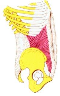 oblicuo menor del abdomen