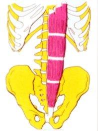 recto del abdomen