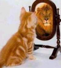 gato en el espejo