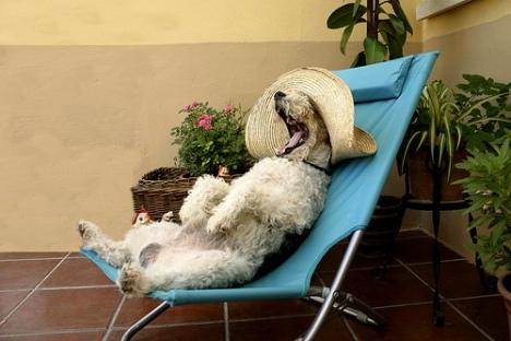 perro descansando