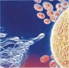 El ácido fólico ayuda a mantener la calidad del semen