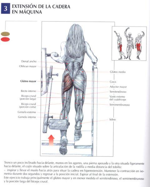 extension de la cadera en maquina