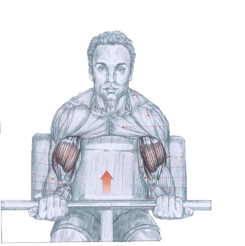 Tips para tu rutina de biceps