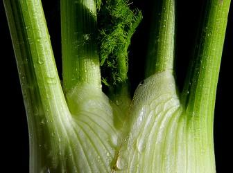 Las propiedades del hinojo punto fape for Cocinar hinojo