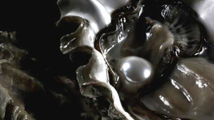 Ostrin Q10, la salud está en las ostras