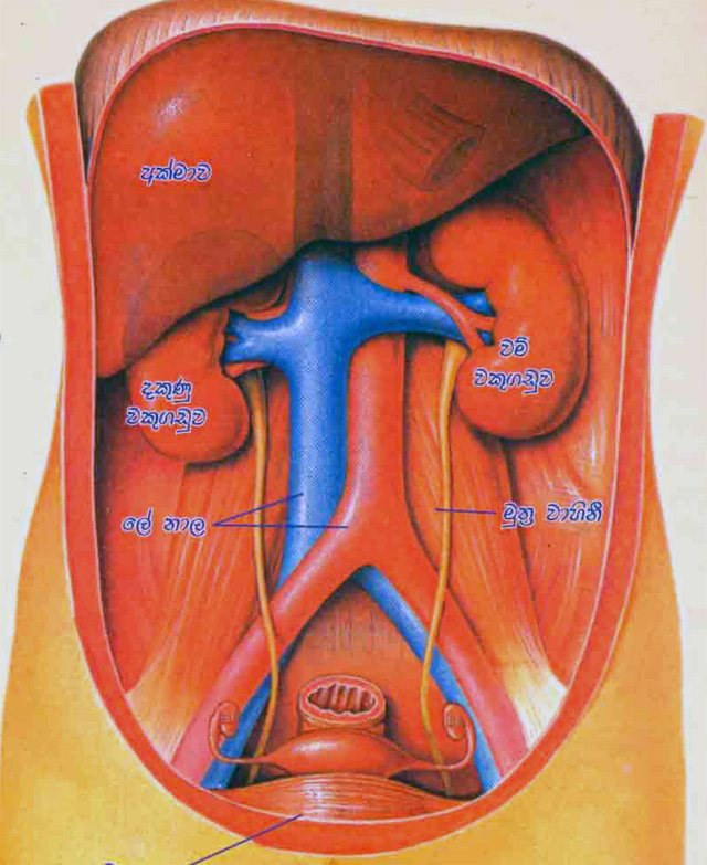 El tabaco y su incidencia en la gastritis