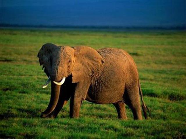 Ecoturismo, safari fotográfico en Kenia