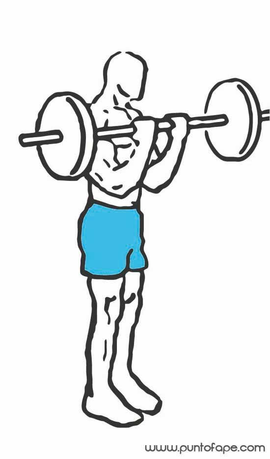 Brazos enormes: el bíceps