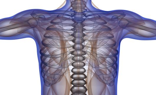 El libro sobre la Anatomía del Cuerpo