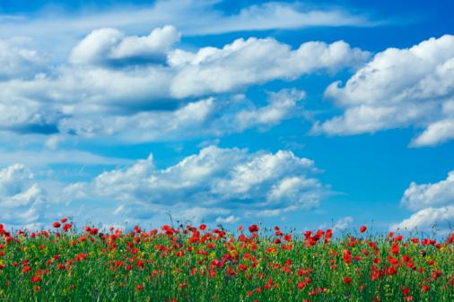 Flores y cielos impresionantes para la montaña en primavera