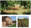 Turismo rural recorriendo Mallorca