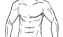 Desarrollo muscular y la L-Arginina