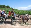 Rutas del Vino en época de vendimia