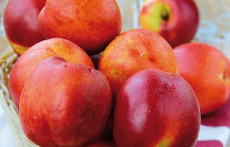 10 alimentos rojos quema grasa corporal