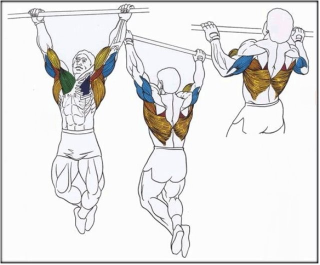 Grupos musculares